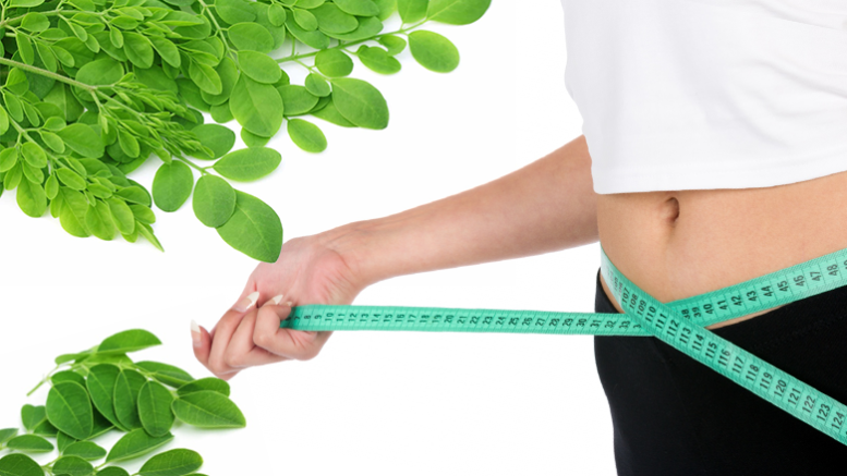 Moringa Leaves, Weight loss