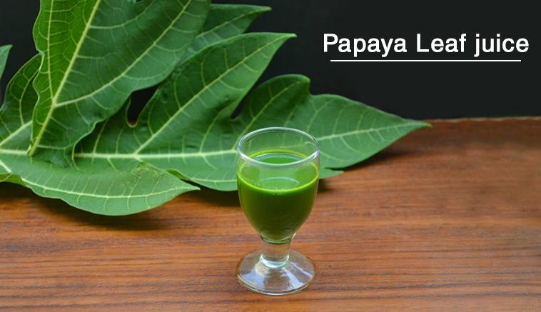 papay leaf