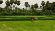 farmers of telangana power supply