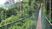 canopy walks