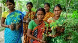 Rajasthan's village receives new 111 trees with the birth of each girl child