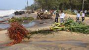 Torrential rains and wind slashes Kanyakumari district