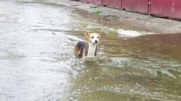 Pet-Dog-saves-the-family-from-a-fatal-landslide