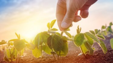 Build Your Roots – Become a Weekend Farmer